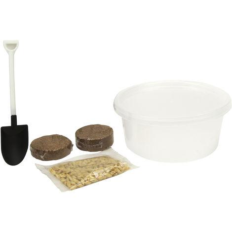 King Catnip Cat Grass Kit (12g) (May Vary)