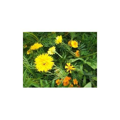 Mélange écologique de graines de fleurs répulsifs Nématodes - 10g