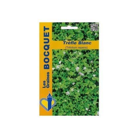 Trèfle blanc (Trifolium repens) pour 40m² - 100g