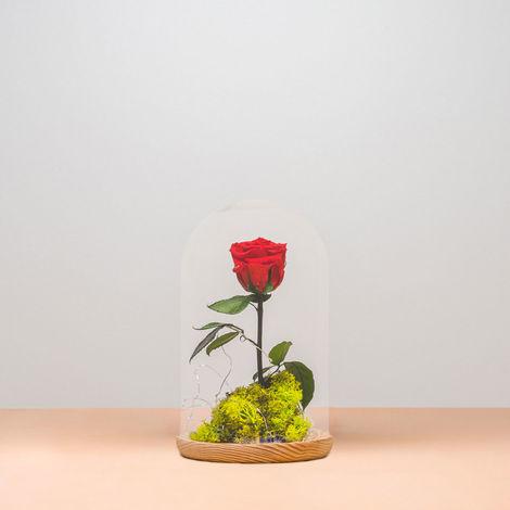 Rosa eterna - Rosa preservada en cúpula de la Bella y la Bestia - Rosa natural liofilizada - Envío de ramos de flores naturales a domicilio 24H GRATIS - Tarjeta dedicatoria incluida de regalo...…