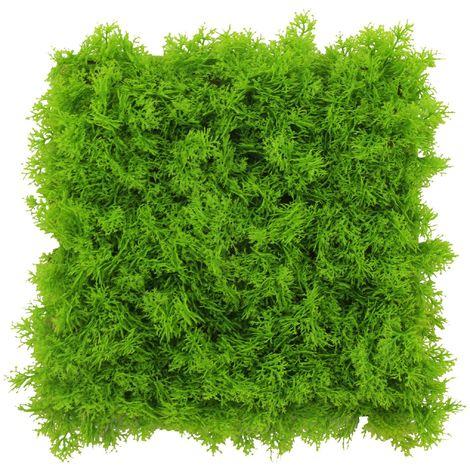 Pannello Lichene Artificiale 50x50cm Verde Mela