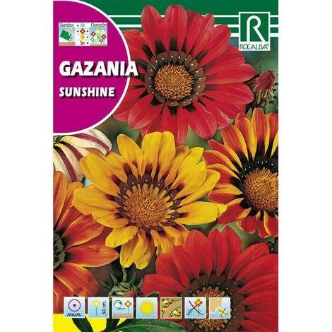 FLORES GAZANIA SUNSHINE