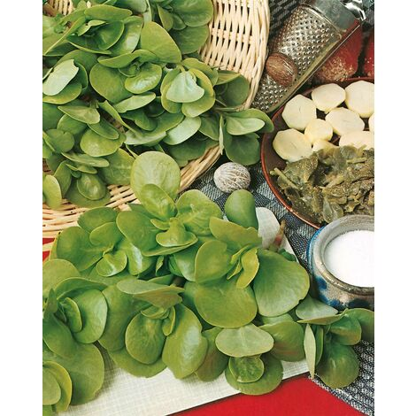 POURPIER DORE - 3 g - Les Légumes Anciens