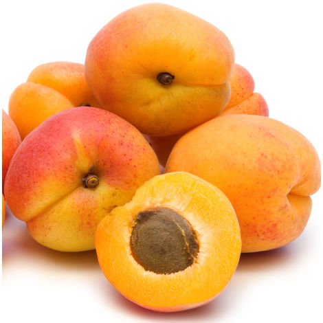 LUIZET - le scion greffé - abricotiers