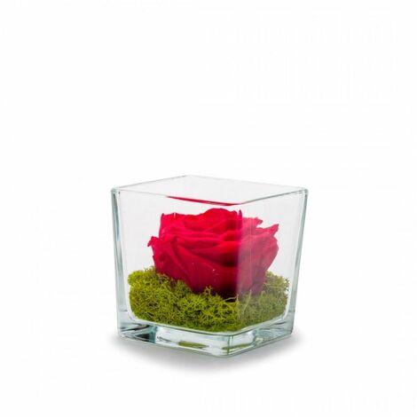 Verrine Genova 10 cm rose stabilisée