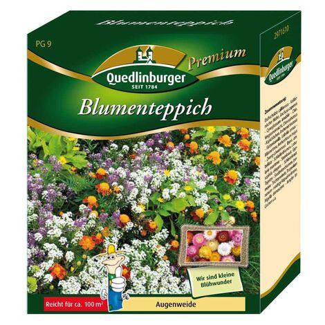 Blumenteppich Augenweide ohne Gräser