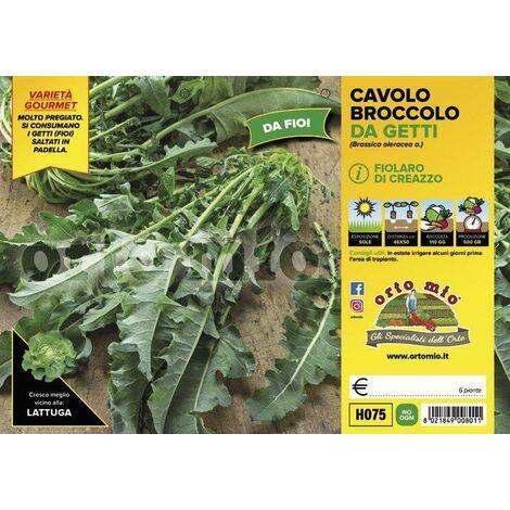 Cavolo broccolo da getti Fiolaro di Creazzo - 6 piante - Orto Mio
