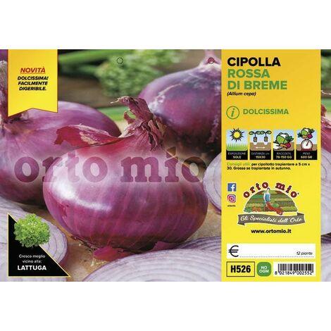 Cipolla rossa di Breme - 12 piante - Orto Mio