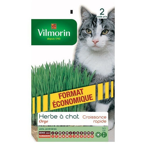 Vilmorin - Herbe à Chat Orge Vert