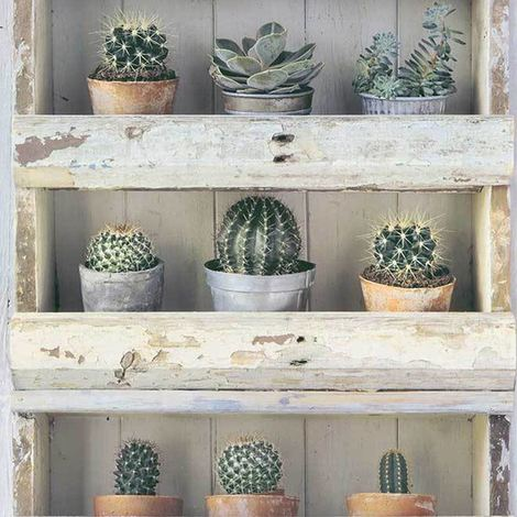 3D Cactus Plant Flower Floral Wood Panel Effect Shelf Wallpaper Luxury Erismann