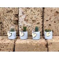 4 Piante Grasse Vaso In Terracotta