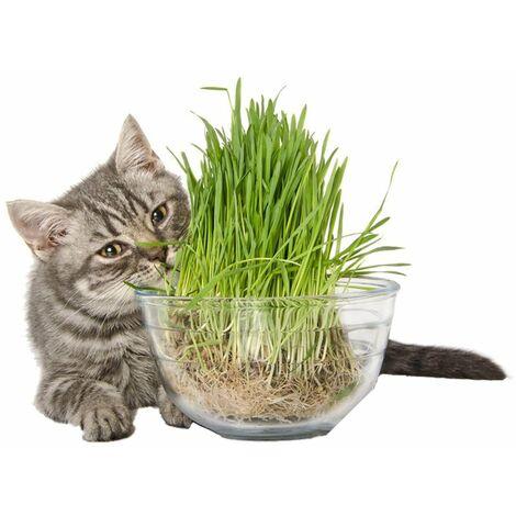 5 buste semi seme seeds erba gatti gatta gatto cat cats busta bustina aromatiche