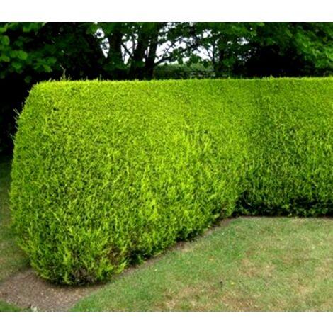 50 plantas