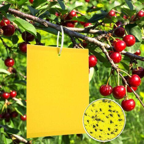 50 trampas para insectos, papel adhesivo de doble cara, papeles adhesivos amarillos para moscas de hojas blancas, pulgones, pequeños con lazos retorcidos, 15 cm x 20 cm