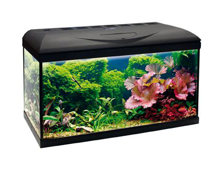 Pet Supplies Fish & Aquariums Acquario Wave Basic 80 Nero Led 95 Litri 82x32x45h Amtra