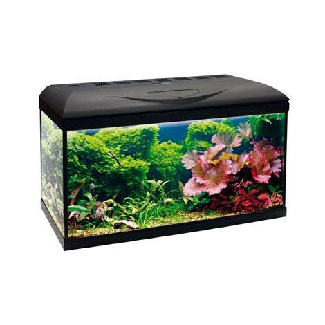 Fish & Aquariums Acquario Wave Basic 80 Nero Led 95 Litri 82x32x45h Amtra