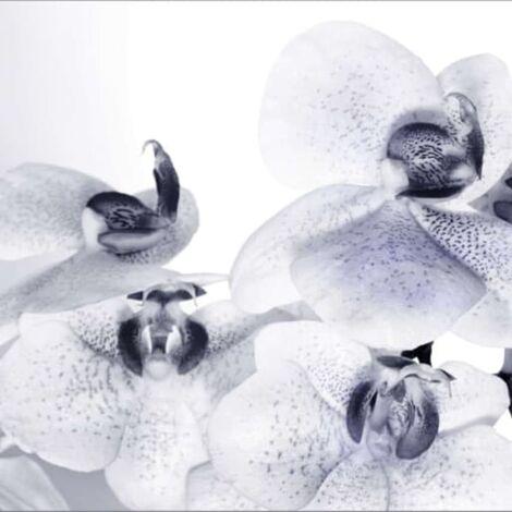 AG Design Mural fotográfico Orchids