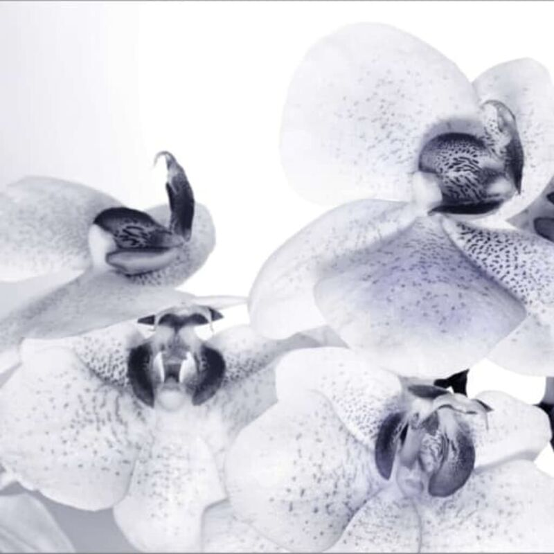Image of AG Design Photo Mural Orchids