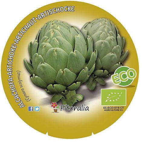 Alcachofa - 6Uds. - Alveolos