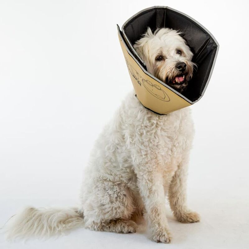 Image of Pet E-collar Comfy Cone M 20 cm Tan - Beige - All Four Paws