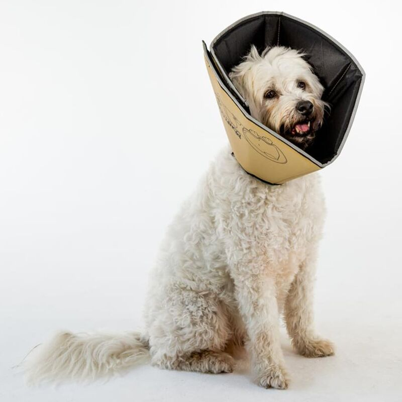 Image of Pet E-collar Comfy Cone XL 30 cm Tan - Beige - All Four Paws