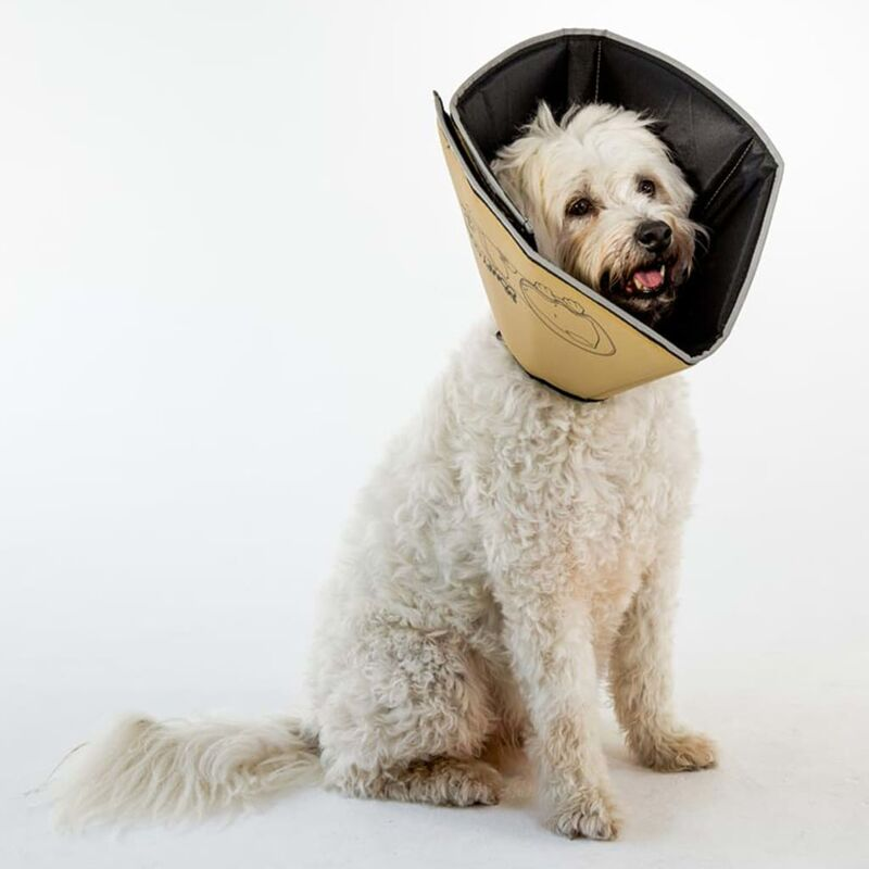 Image of Pet E-collar Comfy Cone XS 11 cm Tan - Beige - All Four Paws