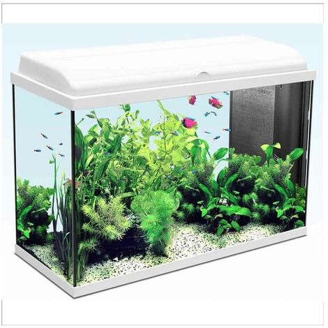 Aquarium Iban - Longueur de 80cm - Blanc