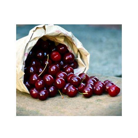 Arbol Frutal Cerezo Picota. Cereza Tardía. 120 - 150 Cm