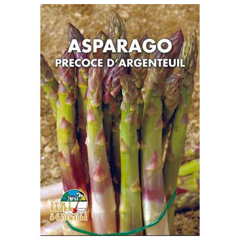 Asparago argenteuil (Semente)