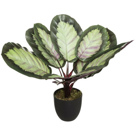 Atmosphera - Plante artificielle Calathea en pot H 50 cm