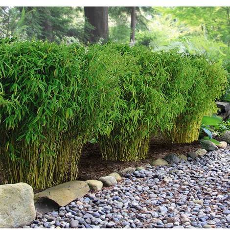 Formative pruning: shaping your young plants