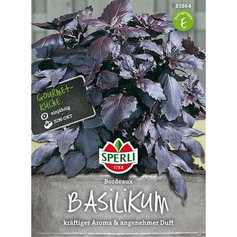 Basilikum Bordeaux