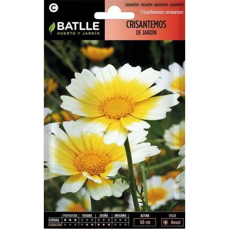 Batlle Crisantemo Jardín Flor Grande Variado