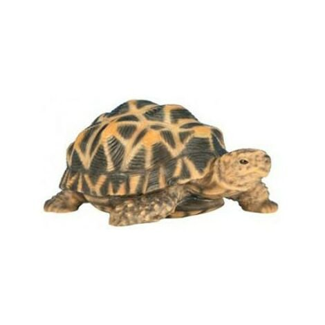 Bébé tortue étoilée 14 cm