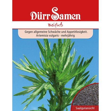 Beifuß Artemisia vulgaris