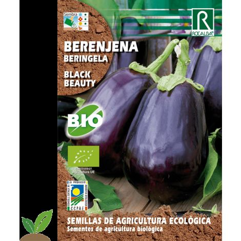 BERENJENA BLACK BEAUTY ECO - SEMILLAS