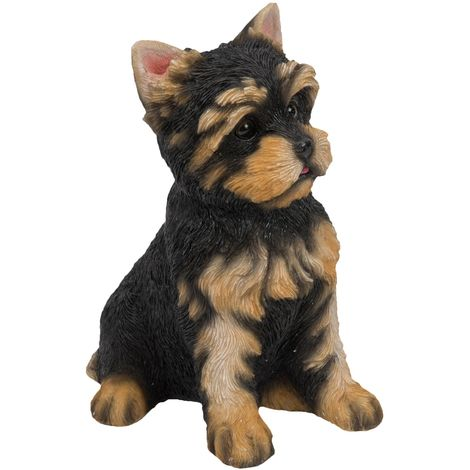Best of Breed Collection - Yorkshire Terrier Pup