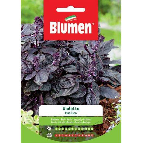Blumen basilico violetto