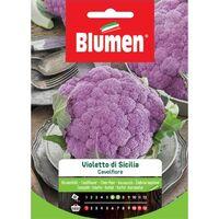 Blumen cavolfiore violetto di sicilia