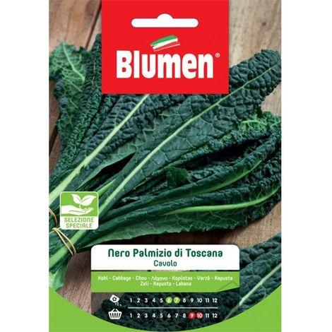 """main image of """"Blumen cavolo nero palmizio di toscana"""""""