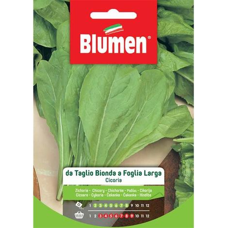 Semente Cicoria da taglio bionda a foglie larghe