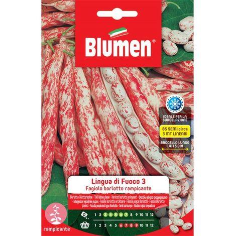 Blumen fagioli borlotti rampicanti lingua di fuoco 3