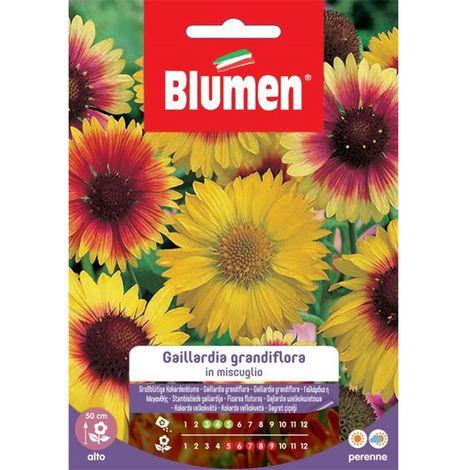 Blumen gaillardia grandiflora in miscuglio