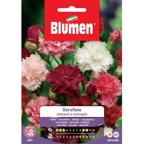 """main image of """"Blumen garofano chabaud in miscuglio"""""""