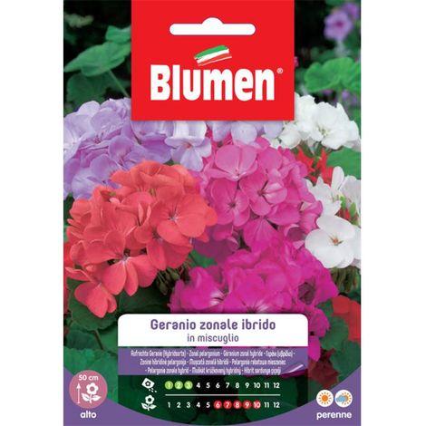 Blumen geranio zonale ibrido f2 in miscuglio