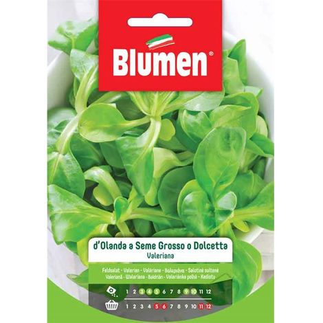 Blumen valeriana d'olanda a seme grosso o dolcetta