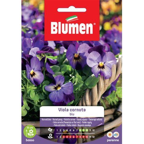 Blumen viola cornuta blu