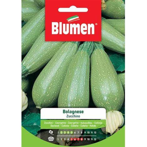 Blumen zucchino bolognese
