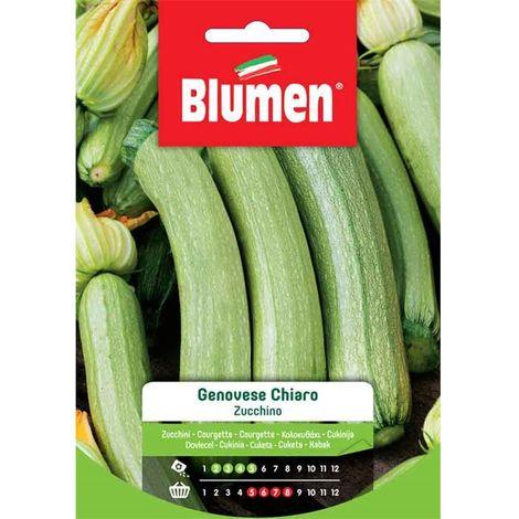 Blumen zucchino genovese chiaro