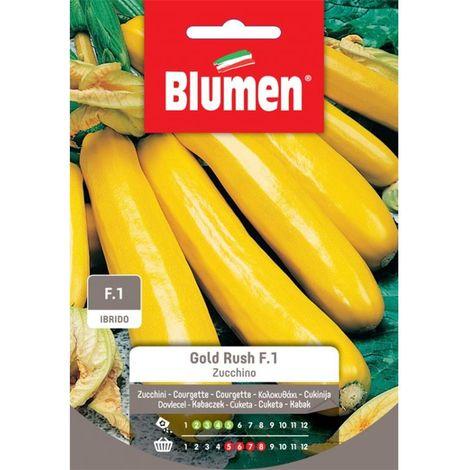 Blumen zucchino gold rush f.1